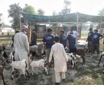 Qurbani-Farms